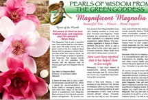 Magnolia / Find out about the impact of the Magnificent Magnolia in our June Version!