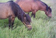 Moje koně