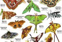 Insetcs-arthopods