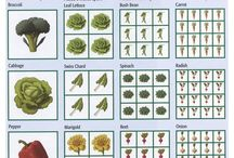 Vegetable Garden Plan / by Tammy Ezell