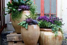The POTTED GARDEN / Fresh ideas for 'potting up'  your 'thrillers', 'fillers' and 'spillers'! / by Marlene Cotter