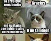 Gatos gruñones