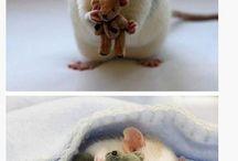 szczurki ❤