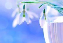 ВЕСНА / spring / Весенние фотографии / photo spring