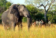 Safari à cheval / Nos safaris à cheval en Afrique - http://www.randocheval.com/safaris.htm