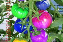 Rainbow fruit and vegetables OMG