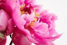 flowers (photos) / Photos of Flowers