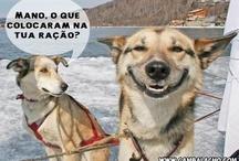 Para rir