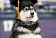 College Grad ✌️
