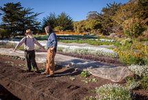 Organic farming info