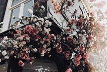 Flowers aesthetic
