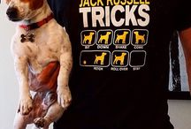 Jack Russell Fans