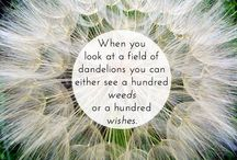 Dandelions: a wish or a weed