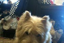 Model - Frodo / The best dog model :)
