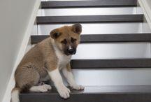 Betonlook trappen Traprenovatie / Uw bestaande trap in een nieuw jasje? Laat je inspireren door de vele mogelijkheden van traprenovatie en trapbekleding. Geef uw trap een mooie, industriële uitstraling met betonlook overzettreden.
