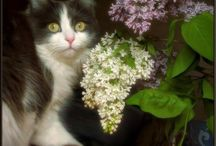Cats / by Carmela Romano