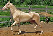 Rare Horse Colors / by Wanda Twellman