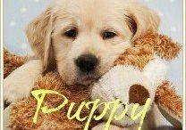 Puppy <3 / by Emily Lau
