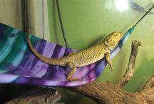 THE fuzzie HAVEN - Reptile