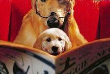 Książkowe psiutki ;))