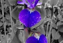 Flowers  / by Karen Beyer