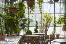 Plants / Indoor Plants, Home plants, Gardering, Potted Plants / by Anabel