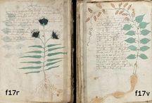 herbář ilustrace