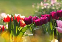 İstanbul is tulip time...