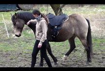 VIJA, Cookie,Sofi,... / v harmonii s koněm, freeriding,