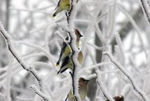 birds and blooms / by Linda Mayhew