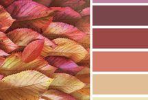 Color Brainstorm