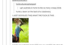 Australia humor