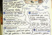 Estudo biologia