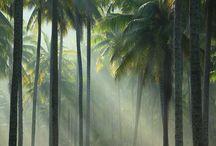 Blondie Island - the inner ashram