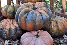 Garden: Tried & True Varieties / Tried-and-true favorites for a Minnesota garden  / by Stasha Switzer
