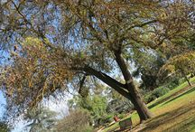 Horsham in Autumn / Brisk Mornings and Sunny Days!  Enjoy a canvas of colour with a walk along the Wimmera River or a picnic at the beautiful Botanic Gardens!