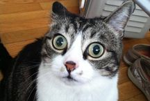 kitty cat④