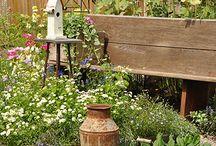 gardening / In the garden