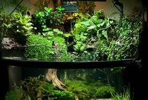 Fish tanks / by Kendal Williams