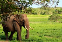 Yala National Park Tented Safari Holidays / Yala Safari Holidays in Sri Lanka, is a specialist safari and adventure tour operator who organize tailor-made game drives in Yala, Tented camping safaris and excursions in and around Yala area.