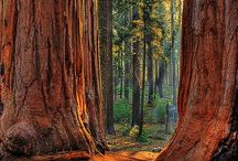 Волшебство, волшебный лес * Magical Forest