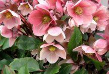 Romantic gardens & lovely flowers