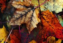 Autumn Inspiration / Be inspired by seasonal colour when selling your home!