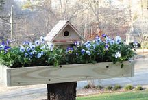 Outdoor Projects / by Cynthia Hatchell
