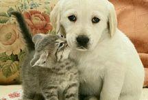 pets!!
