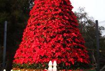 Christmas Trees with Poinsettias