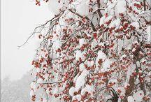 In Inverno...