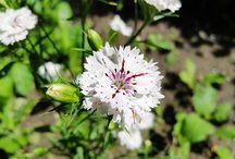 Najpiękniejsze kwiaty / Zdjęcia najpiękniejszych kwiatów: tulipany, róże, stokrotki, kalie, lilie, fiołki, goździki, irysy i wiele, wiele innych!