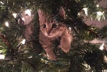 Katze auf/im Baum