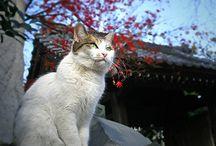 Koty na świecie (5) / o kotach w różnych zakątkach świata